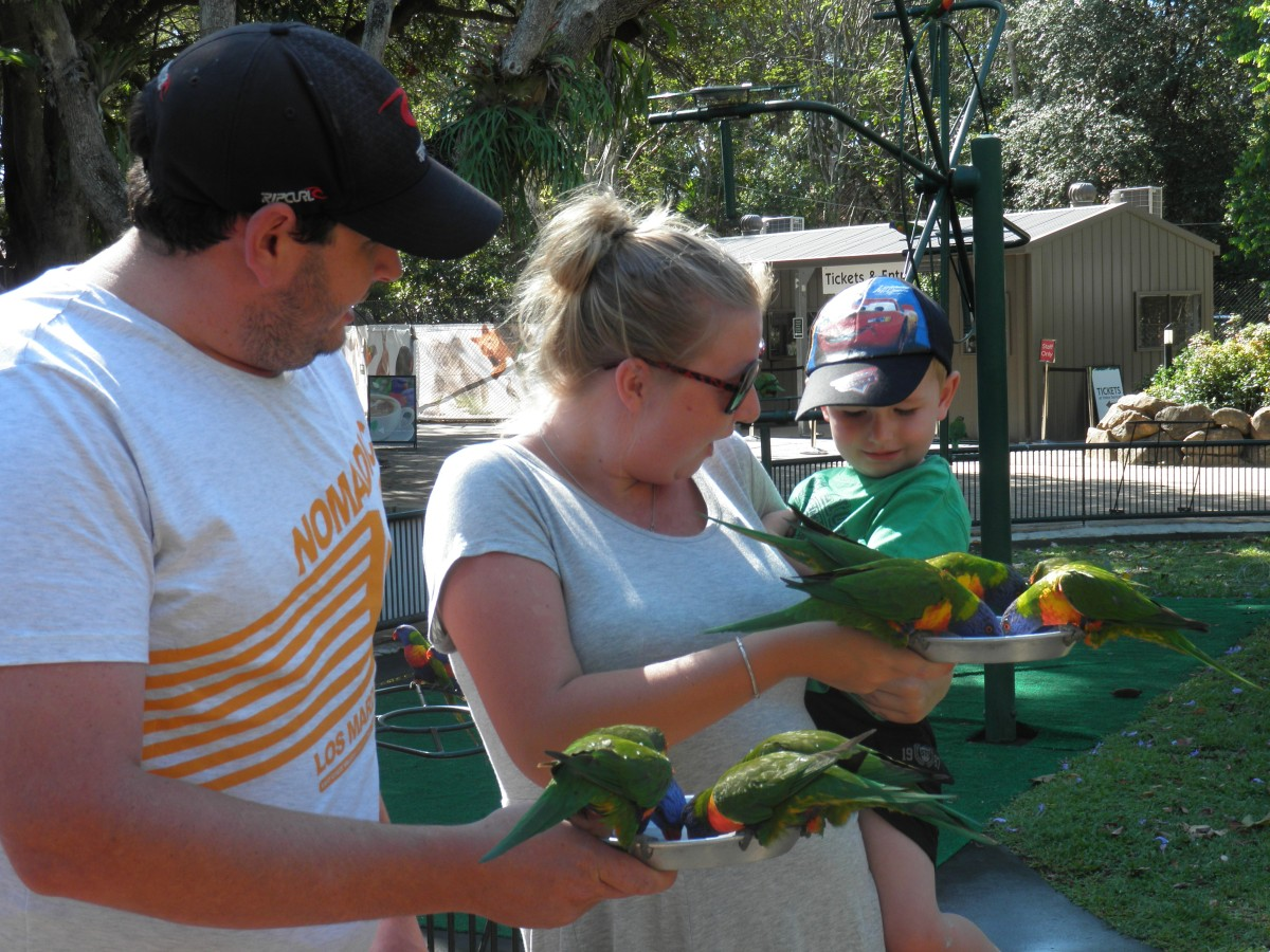 Fun family outing feeding the lorikeets at Currumbin Wildlife Sanctuary.