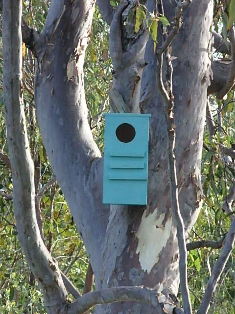 brushtail possum box