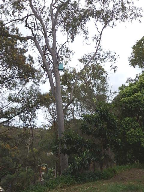 brushtail possum box installed