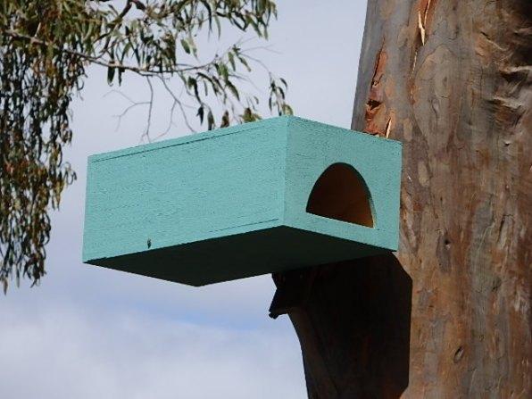 Kookaburra Box