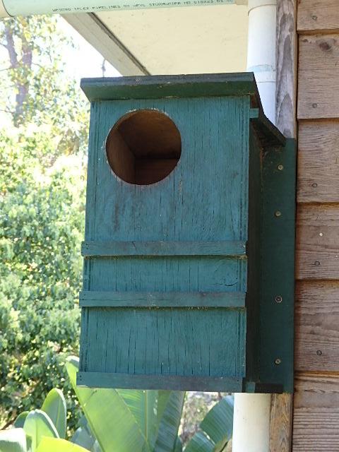 Old Brushtail Possum Box