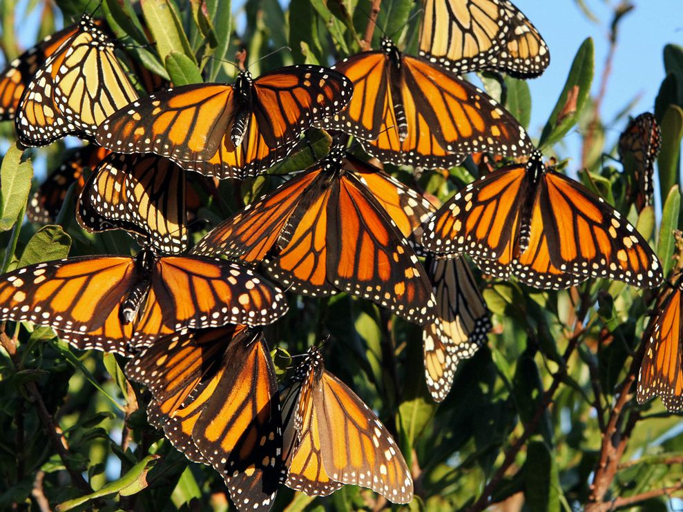 Butterflies And Moths Facts For Kids