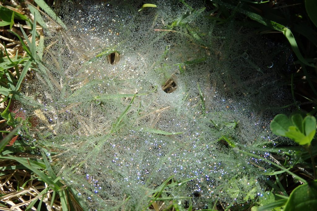 The glistening jewels of spider webs in the grass early one winter's morning